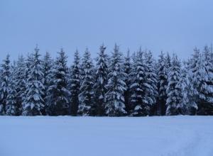 Winter 12 (1)
